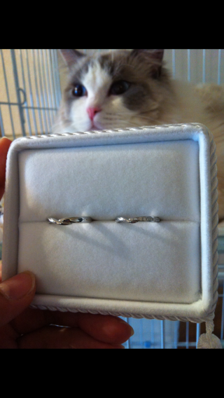 【TRECENTI(トレセンテ)の口コミ】 つけ心地が大変良かったです。また、ダイヤが付いた指輪でV型のものが欲し…