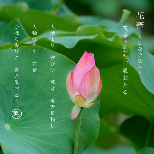 【ひな】花蕾~はなつぼみ・花かずら