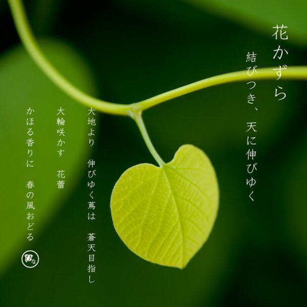 【ひな】花かずら