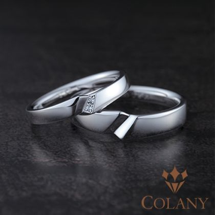 【COLANY(コラニー)】シラカシ