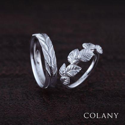 【COLANY(コラニー)】シラカバ