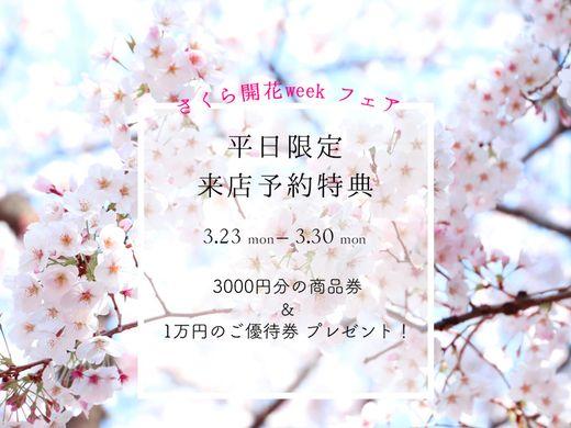 【 さくら開花weekフェア開催!】来店予約で『3000円の商品券』&『1万円の優待券』プレゼント!